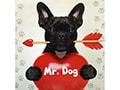Mr Dog salon za sredjivanje kućnih ljubimaca