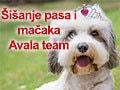 Avala Team Salon za kućne ljubimce