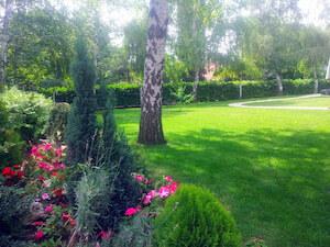 Passiflora uređenje zelenih površina