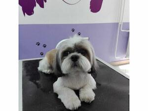 Salon za pse Maza i Lunja