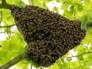 Uklanjanje pčelinjaka