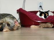 Veterinarska ambulanta Pas, mačka i ...