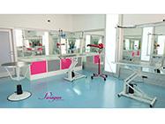 Paragon grooming studio