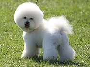 Koska-All for dogs