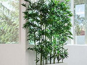 Bambus line