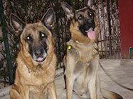 Veterinarska ambulanta Pet Land