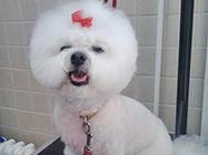 Salon za šišanje pasa i mačaka Avala team