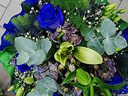 Cvećara Leptir