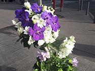 Cvećara Afrodita