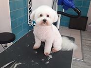 Pets Beauty Salon