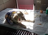 Veterinarska Ambulanta Testudo Vet