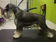 Mr Diego grooming