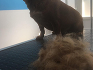 GroomyVet sisanje pasa