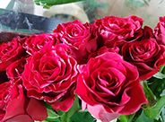 Cvećara Dragana - S