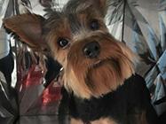 Djidji & Amici berbernica za pse