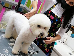 Doggy Style Grooming