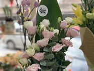 Cvećara Čiča 1960