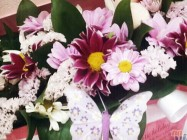 Polje suncokreta - Cvećara