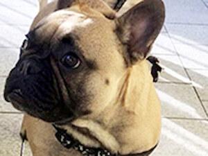 Golden Pet Vet veterinarska ambulanta