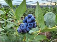 Proizvodi od voća i povrća