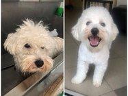 Sara & pretty dog salon za šišanje pasa