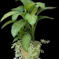 Saksijko cveće - Biljni vrt