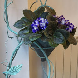 Saksijko cveće - Ljubičica u saksiji u keramičkoj posudi