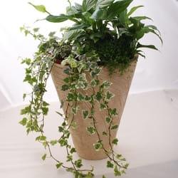 Saksijko cveće - spatifilum i hedera helix u razigranom izdanju