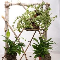 Saksijsko cveće - zeleni prozor