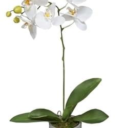 Veštačko cveće - Biljka orhideja u saksiji