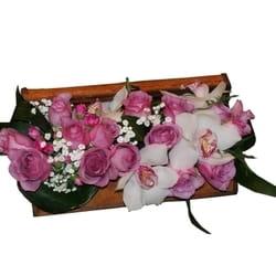 Orhideje - Orhideje u kovčežiću
