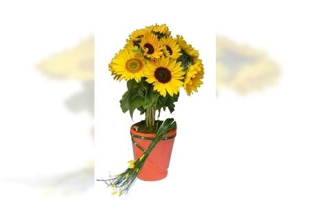 Jesenji cvetni aranžmani - Suncokreti