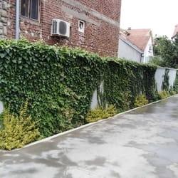 Brsljen na zidu