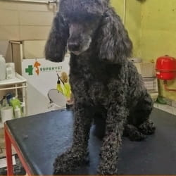 Sisanje pasa + GRATIS zaštita protiv krpelja i buva