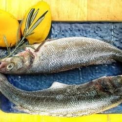 Uvek sveza riba u konobi Riba Ribi Grize Rep