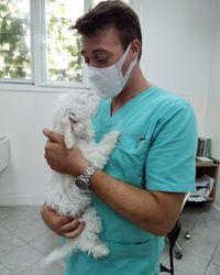 Sterilizacija pasa Karaburma