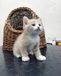 Vakcinacija mačaka Karaburma