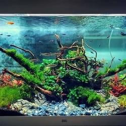 Akvarijum za kancelariju Juwel Primo 110