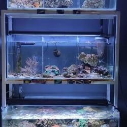 Akvarijum za deciju sobu Juwel