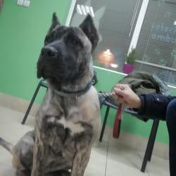 Prevoz psa do veterinara