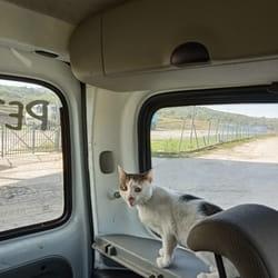 Prevoz do veterinara