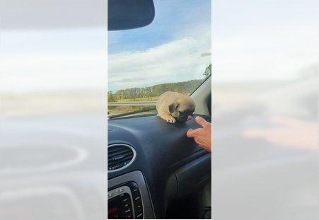 Prevoz pasa u Nemacku