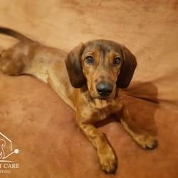 Čuvanje pasa Beograd pansion za pse