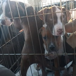 Prevoz pasa u Crnu Goru