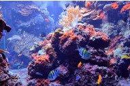Izaberite prave ribice za vaš akvarijum
