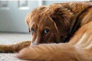 Znaci koji pokazuju da vašeg psa nešto boli